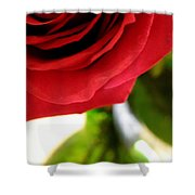 Red Rose In Glass Vase Shower Curtain