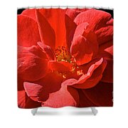 Red Rose Summer Shower Curtain
