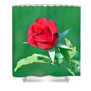 Red Rose With Star-shaped Collar Shower Curtain