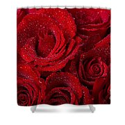 Red Roses And Water Drops Shower Curtain