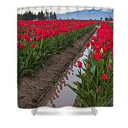 Red Rows Shower Curtain