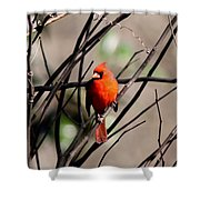 Red Royalty Shower Curtain