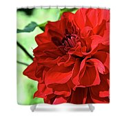 Red Ruby Dahlia Shower Curtain