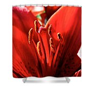 Red Rules Shower Curtain