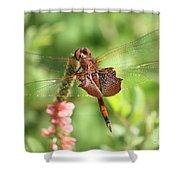 Red Saddlebag Dragonfly In The Marsh Shower Curtain
