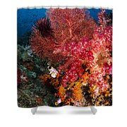 Red Sea Fan And Soft Coral In Raja Shower Curtain