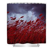 Red Sea Oats Blow In The Wind Shower Curtain