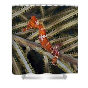Red Seahorse On Caribbean Reef Shower Curtain