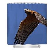 Red-shouldered Hawk - Apache Shower Curtain