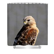 Red-shouldered Shower Curtain