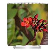 Red Snake Shower Curtain