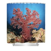 Red Soft Coral,  Australia Shower Curtain