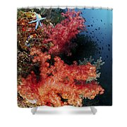 Red Soft Corals And Blue Leather Sea Shower Curtain