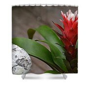 Red Spikes Shower Curtain
