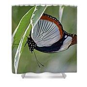 Red Spot Diadem Butterfly Shower Curtain