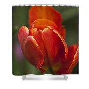 Red Spring Blooming Tulip Shower Curtain