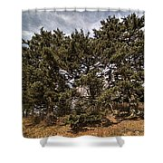 Red Spruce On Whitetop Mountain Shower Curtain