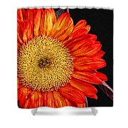 Red Sunflower II  Shower Curtain