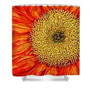 Red Sunflower Iv Shower Curtain