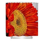 Red Sunflower V Shower Curtain
