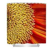 Red Sunflower Viiii Shower Curtain
