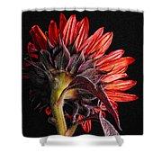 Red Sunflower X Shower Curtain