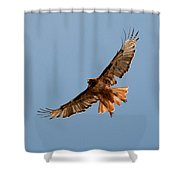 Red Tail Hawk 202-3 Shower Curtain
