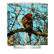 Red Tail Hawk Visitor Shower Curtain
