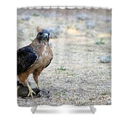 Red Tailed Hawk Catch Shower Curtain