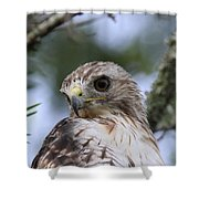 Red-tailed Hawk Has Superior Vision Shower Curtain