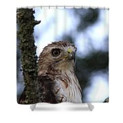 Red-tailed Hawk - Hawkeye Shower Curtain