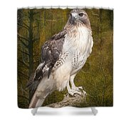 Red Tailed Hawk Perched On A Branch In The Woodlands Shower Curtain