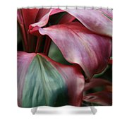 Red Ti - Cordyline Terminalis Shower Curtain