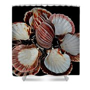 Red-toned Seashells Shower Curtain