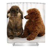 Red Toy Poodle Pup With A Lionhead Shower Curtain