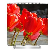 Red Tulip Flowers Art Prints Spring Florals Shower Curtain