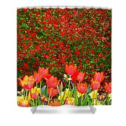 Red Tulip Flowers Shower Curtain