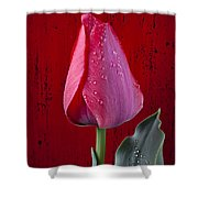 Red Tulip With Dew Shower Curtain