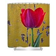 Red Tulip With Yellow Wall Shower Curtain