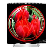 Red Tulips Under Glass Shower Curtain