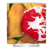 Red White And Yellow Shower Curtain