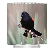 Red-winged Blackbird - Are You Listening Shower Curtain