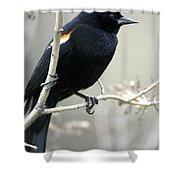 Red-winged Blackbird Agelaius Shower Curtain