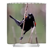 Red-winged Blackbird - Can You Hear Me Now Shower Curtain