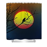 Red Winged Blackbird In The Sun Shower Curtain