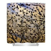 Red-winged Blackbirds At Sunset Shower Curtain