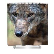 Red Wolf Closeup Shower Curtain