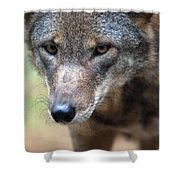 Red Wolf Closeup Shower Curtain