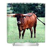 Reddish Brown Longhorn Shower Curtain
