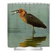 Reddish Egret Caught A Fish Shower Curtain